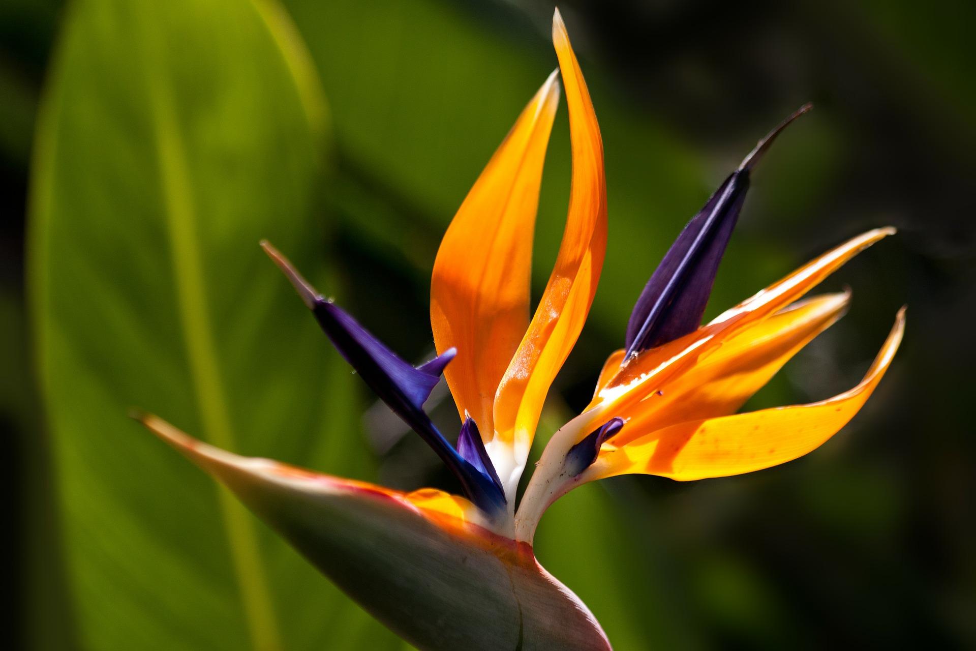 10583-flower-183693-1920.jpg