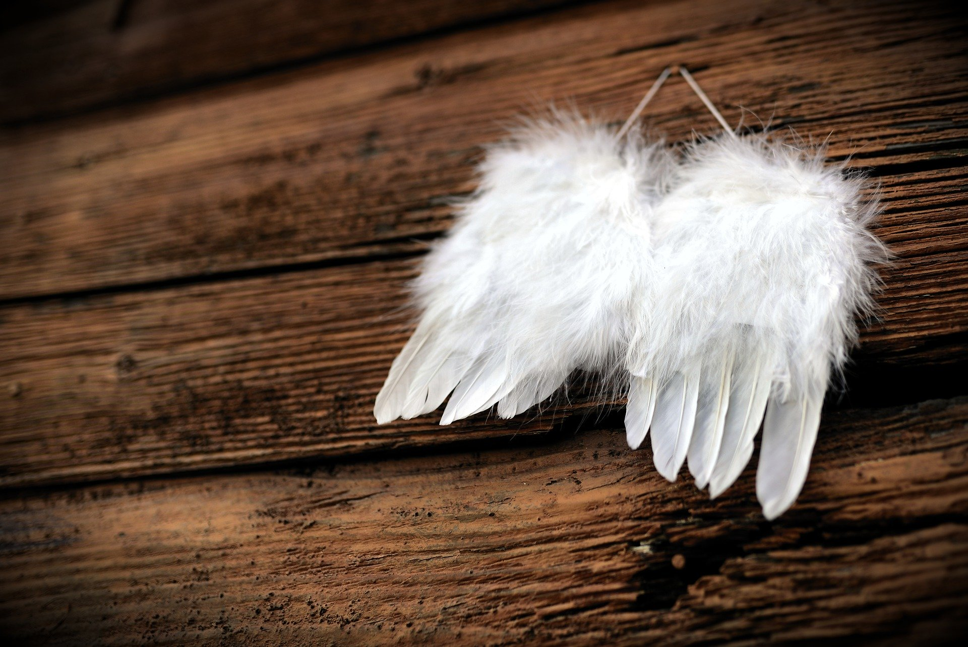 7530-feather-4661244-1920.jpg