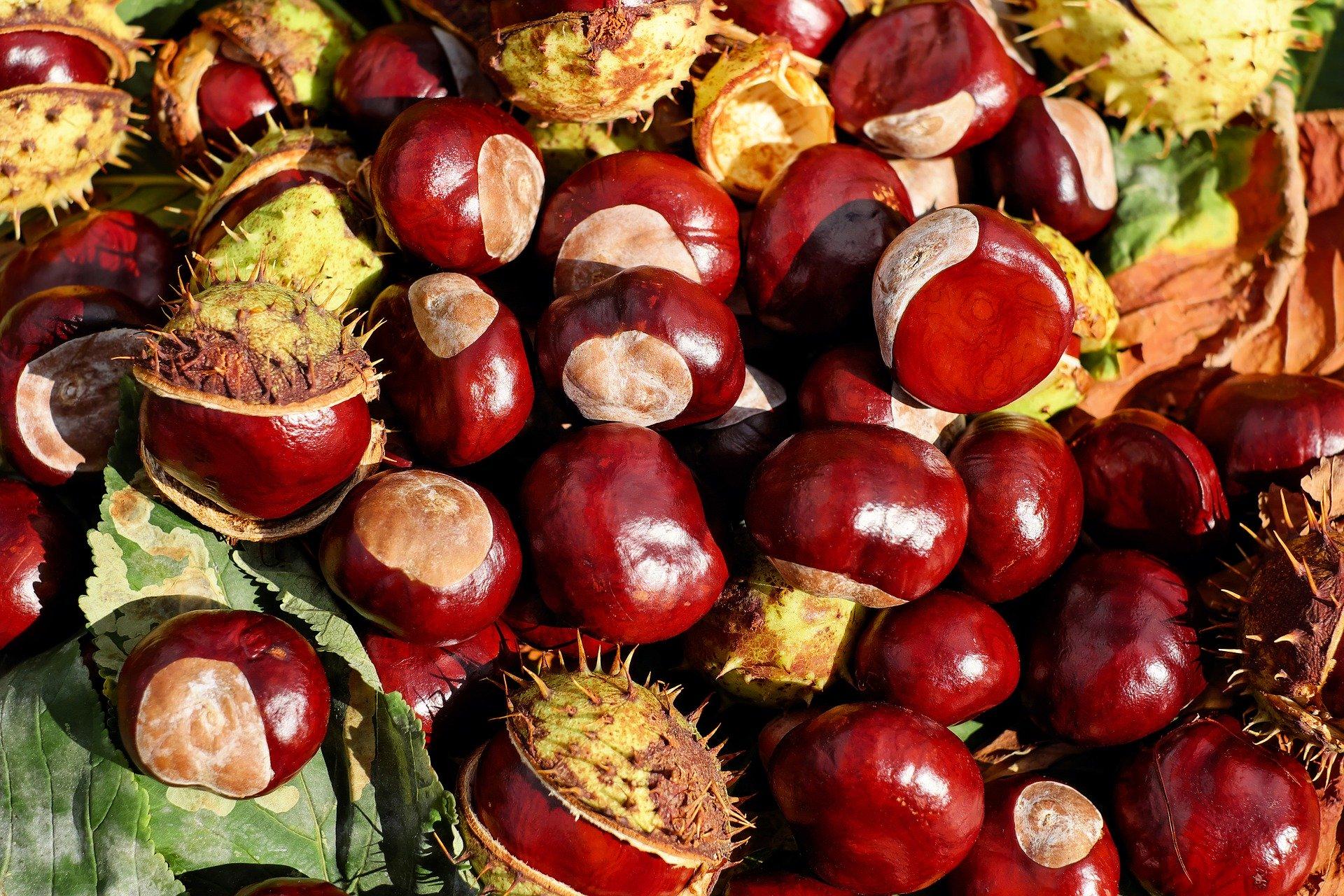 9420-chestnut-1710430-1920.jpg